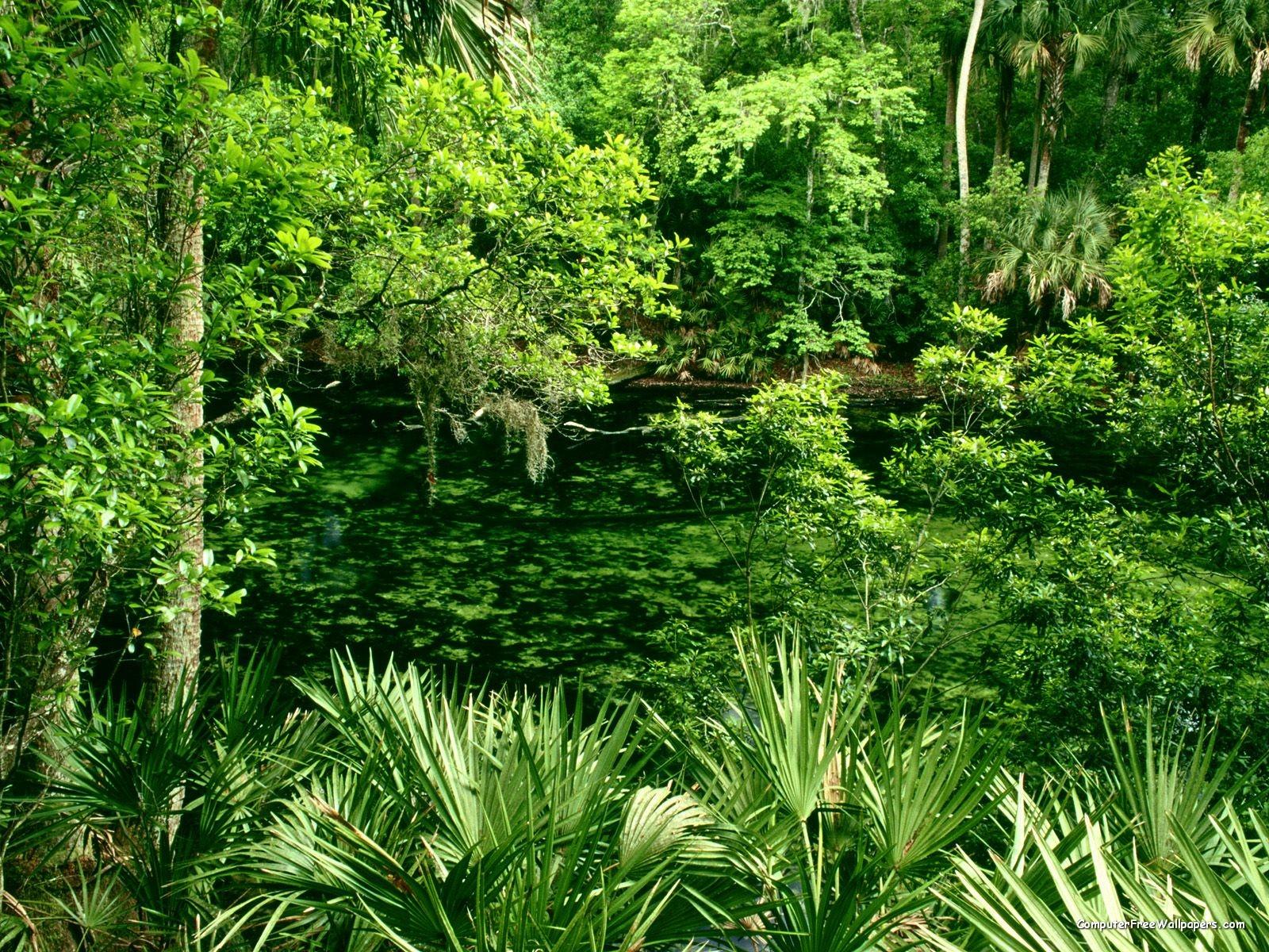 Sfondi natura sfondissimo sfondi screensaver gratis for Immagini desktop natura