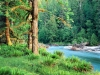 sfondo bosco naturale