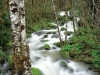 delta-creek-and-alders-siskiyou-national-forest-oregon.jpg