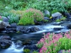 paradise-river-mount-rainier-national-park-washington.jpg
