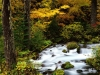 roaring-river-mount-hood-national-forest-oregon.jpg