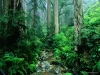 webb-creek-tamalpais-state-park-california.jpg