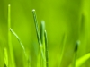 wallpaper_grass