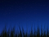 wallpaper_grass_night