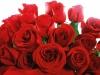 ws_red_valentines_1680x1050.jpg