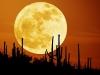 ws_rising_moon_1680x1050.jpg