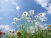 ws_sky_glade_1680x1050.jpg