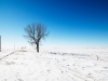 ws_snow_road_tree_1680x1050.jpg