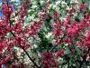 ws_spring_in_flower_1680x1050.jpg