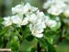 ws_spring_tree_1680x1050.jpg