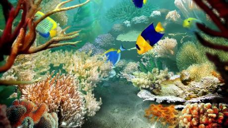 acquario-naturale