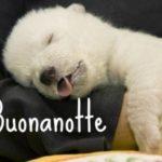 foto-dolci-e-simpatiche-per-buonanotte-su-WhatsApp-7-460x338