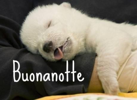 Foto dolci e simpatiche per buonanotte su whatsapp 7 460 for Immagini gratis per whatsapp
