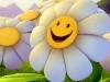 fiori animati