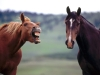 horse_play.jpg