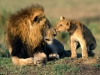 lion_kisses.jpg