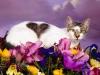 love_cat.jpg
