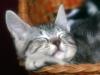 peaceful_slumber.jpg
