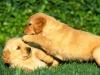 puppy_power.jpg