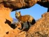 rocky_habitat_red_fox.jpg