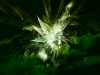 abstract-green-31276.jpg