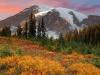 Fall in Paradise, Mount Rainier National Park