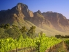 Vineyard in Franschhoek, South Africa