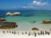 Penguins on Boulder Beach, South Africa