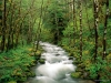 mckenzie-river-willamette-national-forest-oregon.jpg