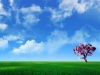 1680x1050_widescreen_wallpaper_1_3_.jpg